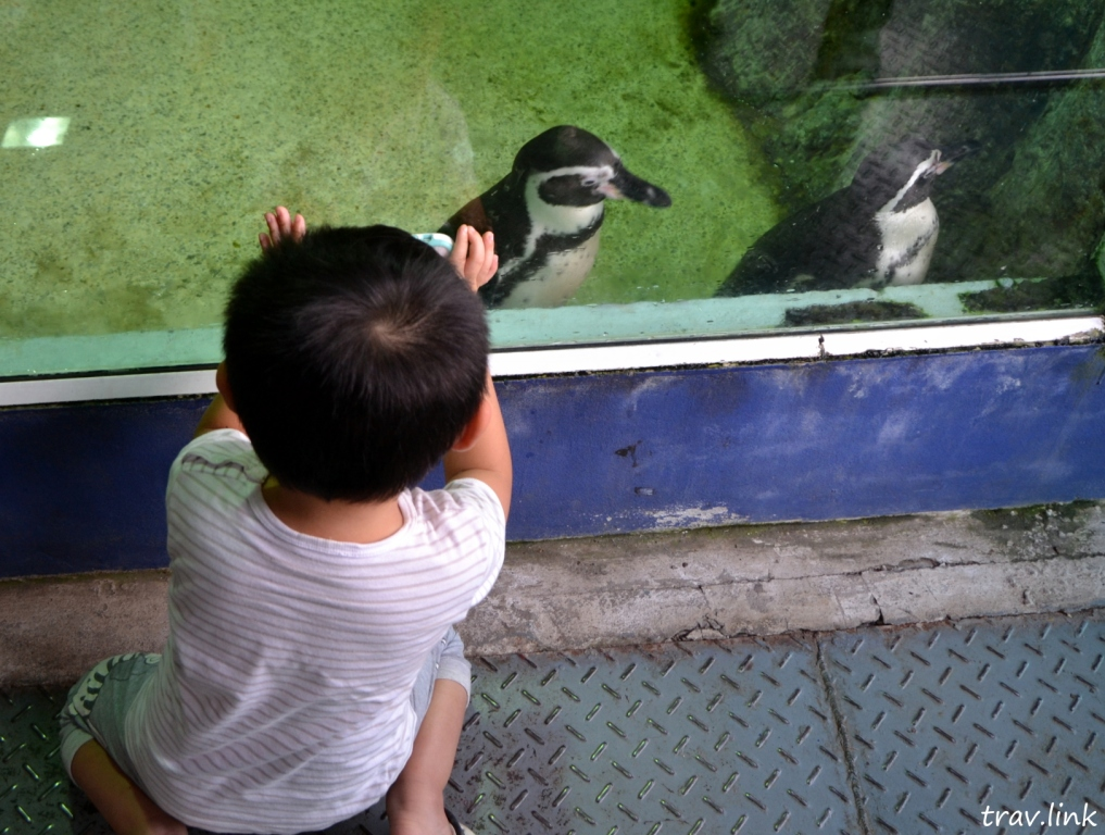 Зоопарк Дусит в Бангкоке: пингвины