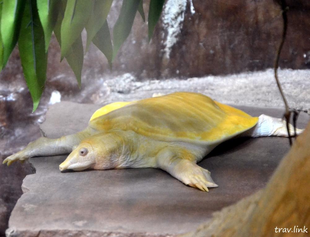 Зоопарк Дусит в Бангкоке: черепаха-альбинос