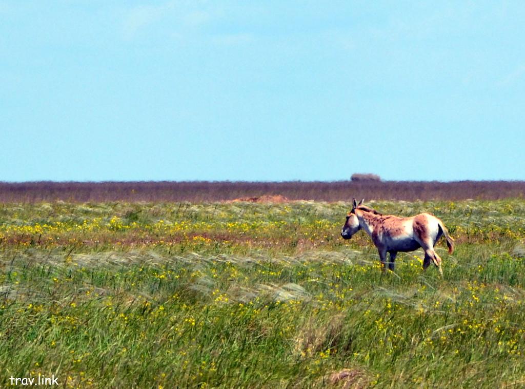 Бирючий остров фото муфлона