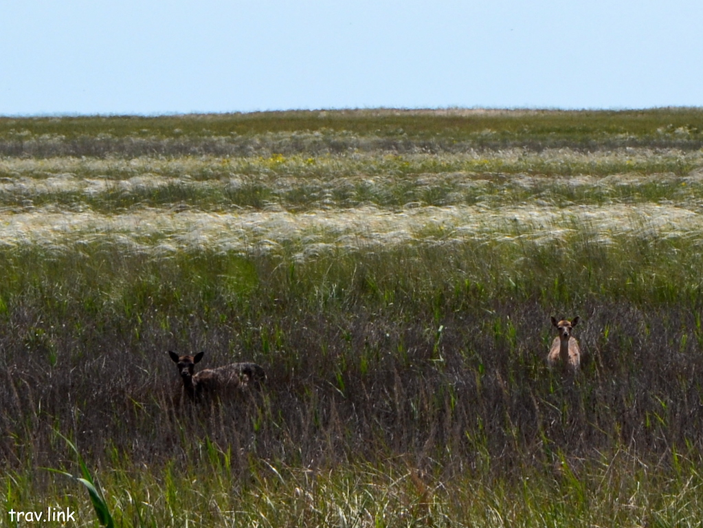 Бирючий остров фото оленей